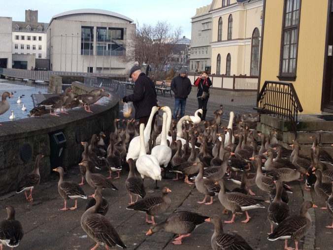 MARK ICELAND FEB 2015 2700